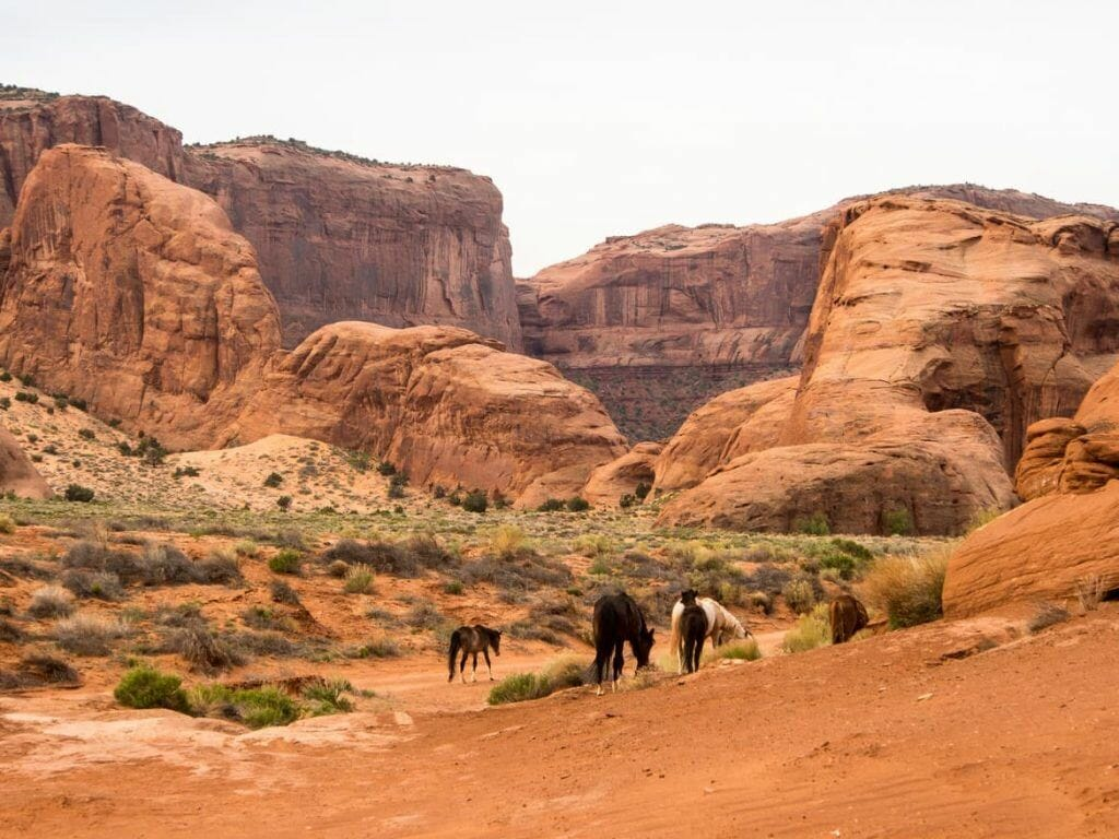 Mustangs im Monument Valley