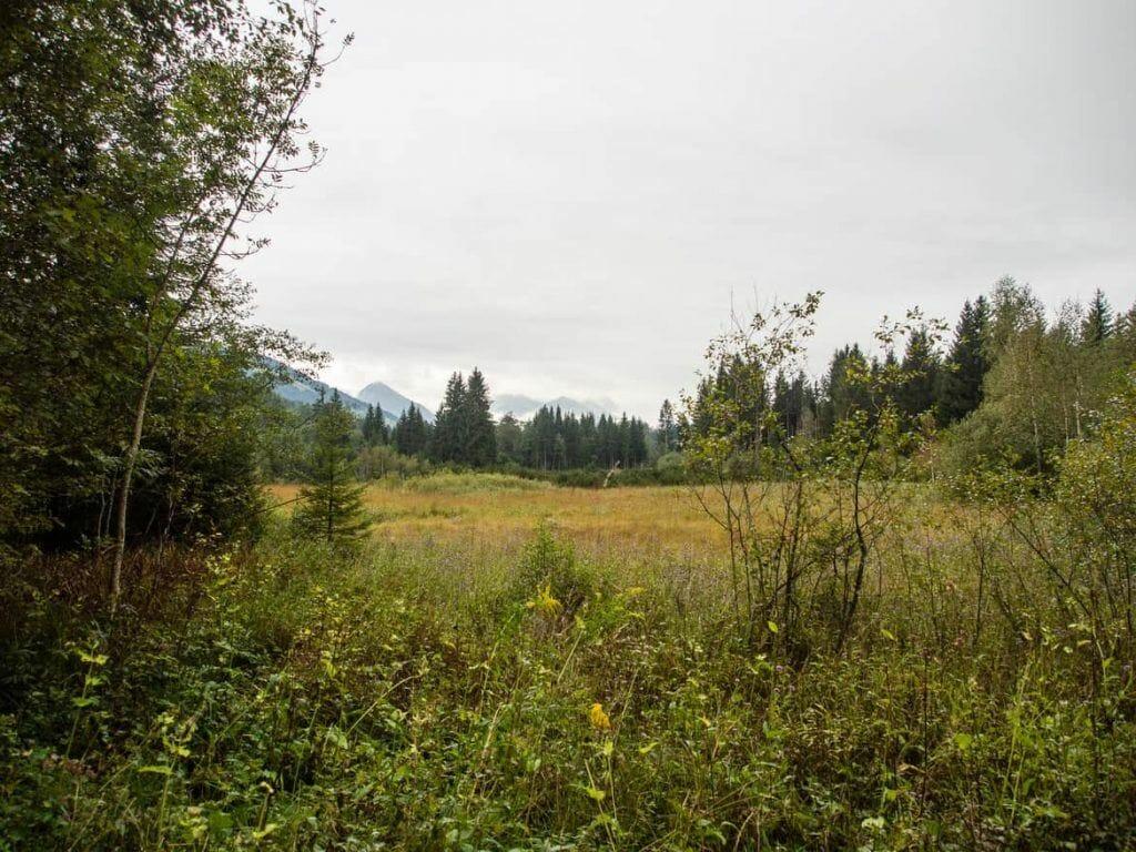 Blick über das Hochmoor Mühlau in Reit im Winkl