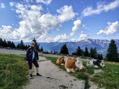 Herde Kühe auf der Roßfeldpanoramastraße in Berchtesgaden