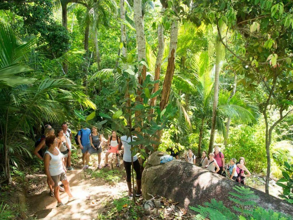 Weg durch den Dschungel im Fond Ferdinand