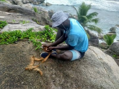Robert zeigt uns das Öffnen einer Kokosnuss auf La Digue Seychellen