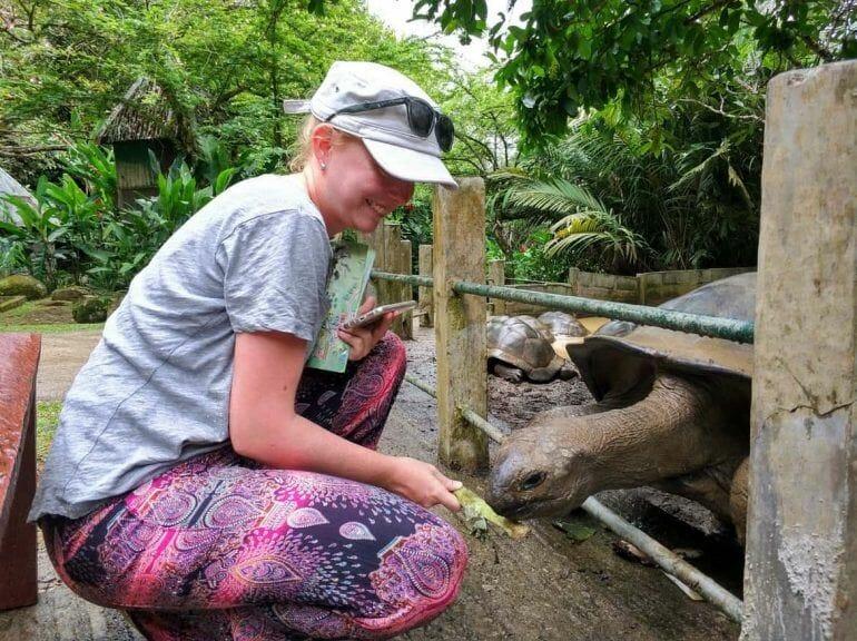 Fütterung der Riesenschildkröte auf dem Jardin du Roi Gewürzgarten auf Mahe Seychellen