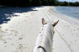 Life between the ears - Traumstrand aus Reitersicht auf Mahe Seychellen