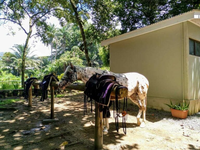 Stute am Stall von Turquoise Horse Trails auf Mahe Seychellen
