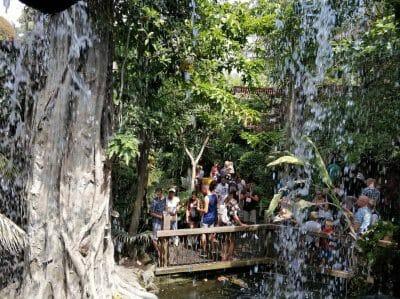Regenwald Bereich im Palma Aquarium Mallorca