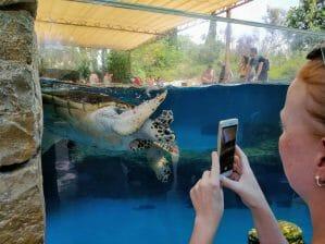 Meeresschildkröte im Palma Aquarium auf Mallorca