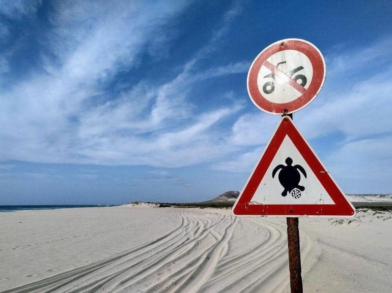 Achtung Schildkröten-Eiablage auf Boa Vista Kapverden