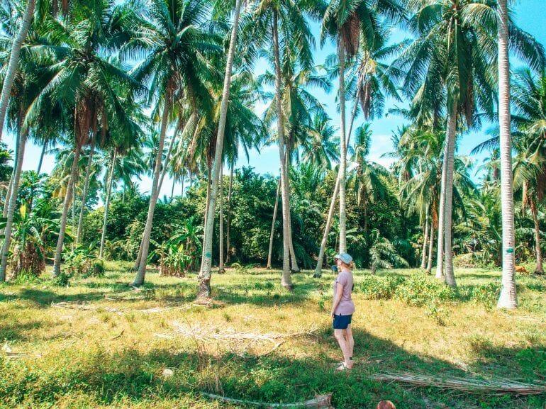 Cooles Palmenfoto von Sandra auf Koh Samui Thailand