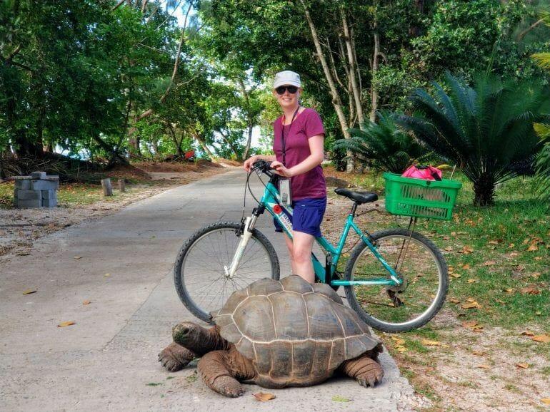Schildkröte auf La Digue Seychellen