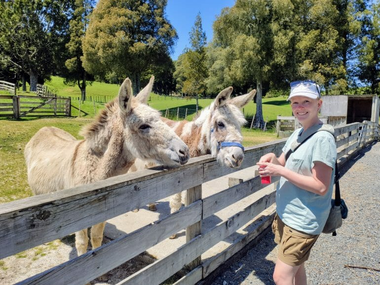 Esel bei Sheep World Neuseeland