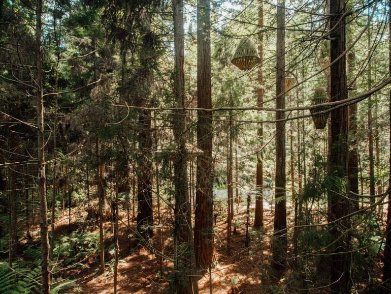 Redwoods Treewalk in Rotorua Neuseeland