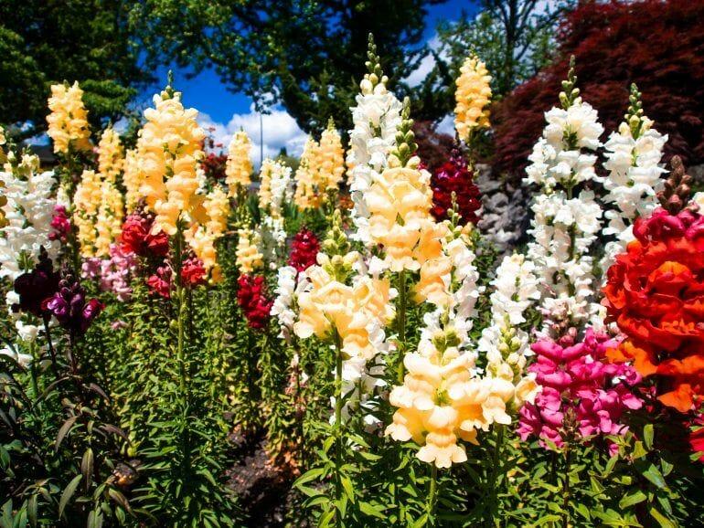 Kuirau Park in Rotorua Neuseeland