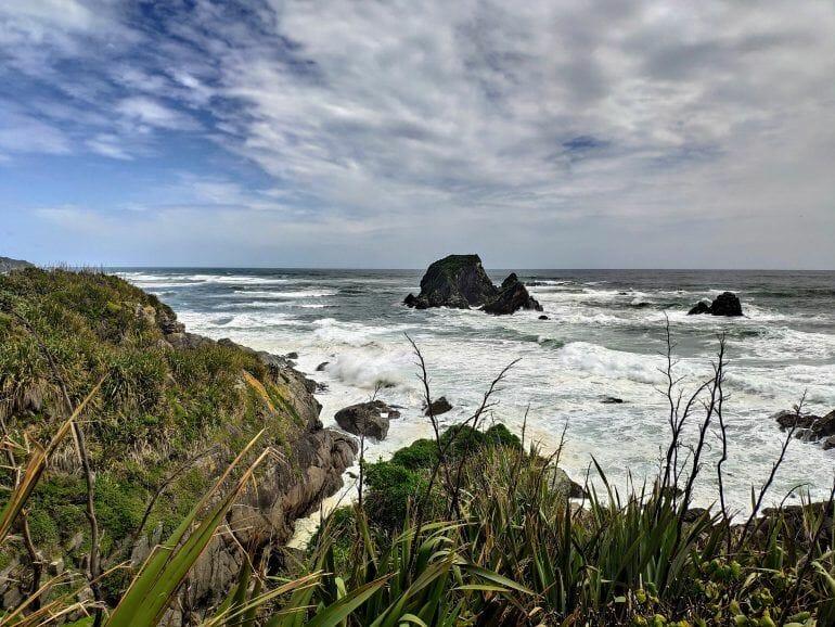 Seal Colony Tauranga Neuseeland